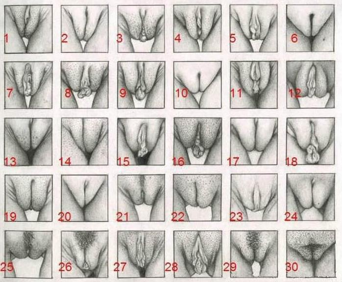 Verschillende vagina's