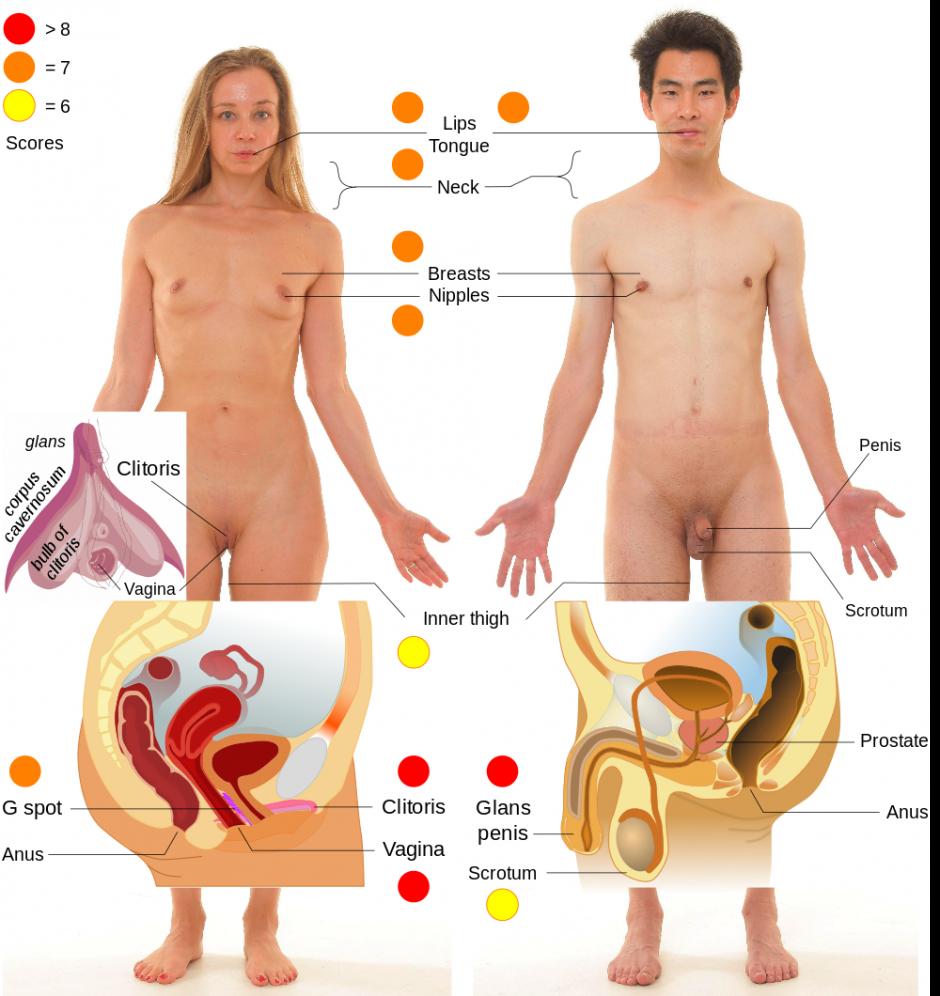 Erogene zones